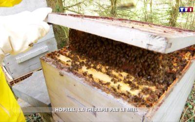Le miel à l'hôpital